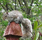 Squirrel_IMG_3556