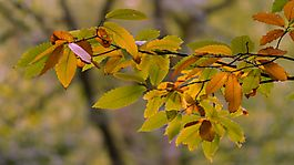 MG_6915_Herbst_2