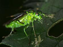 makro_insekt_closeup-8043644