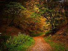 Verträumter Herbstwald