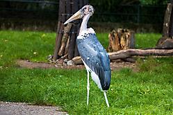 Zoo Schönheit