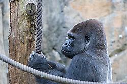 30.07.2019 - Zoo Duisburg mit Monika, Volker und Reiner