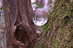 Kugel im Baum