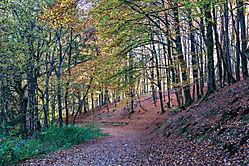 Herbst an der Gloer 2