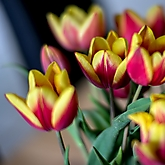 2021 Tulpen Rot-Gelb mit Neuglas 1.1