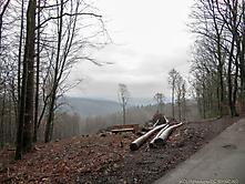 202101_Wo_ist_der_Wald