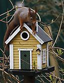 Eichhörnchen_MG_9294