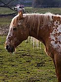 Pferd_IMG_9868