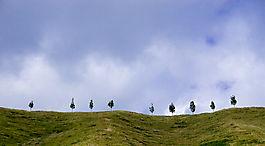 Bäume auf Hügel 1