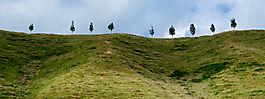 Bäume auf Hügel 2