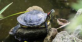 Schildkröte k