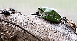 Frosch mit Futter