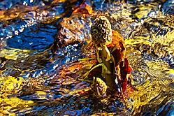 buntes Treiben im Wasser