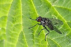 auf Insektensuche