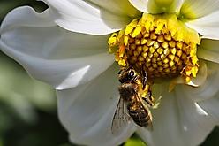 Wespen und Blümchen