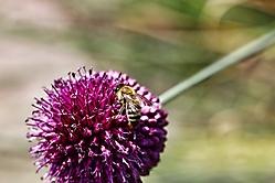 Bienen und Blümchen
