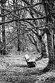 die Einsamkeit des Waldes