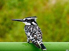 schönes Vögelchen