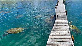 schwimmen mit Schildkröten auf Jamaika
