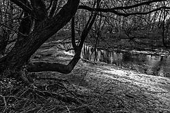 Alter Flussarm