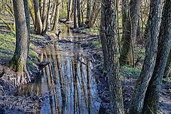 Unterwegs im Wald 3