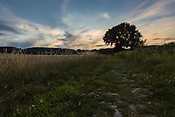 Feld am Abend