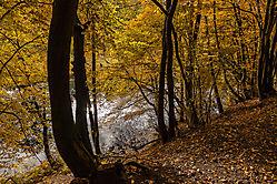 Herbstwald und See