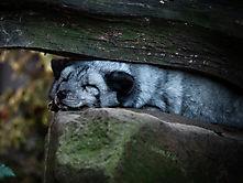 Zoo Duisburg-2
