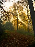 Morgens im Wald1