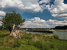Rheinauen