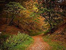 Verträumter Herbst an der Wupper - 3