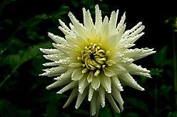 Blüten-Blumen