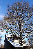 Der Hausbaum